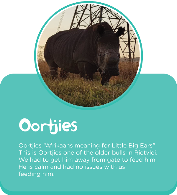 Meet-our-rhinos1.png