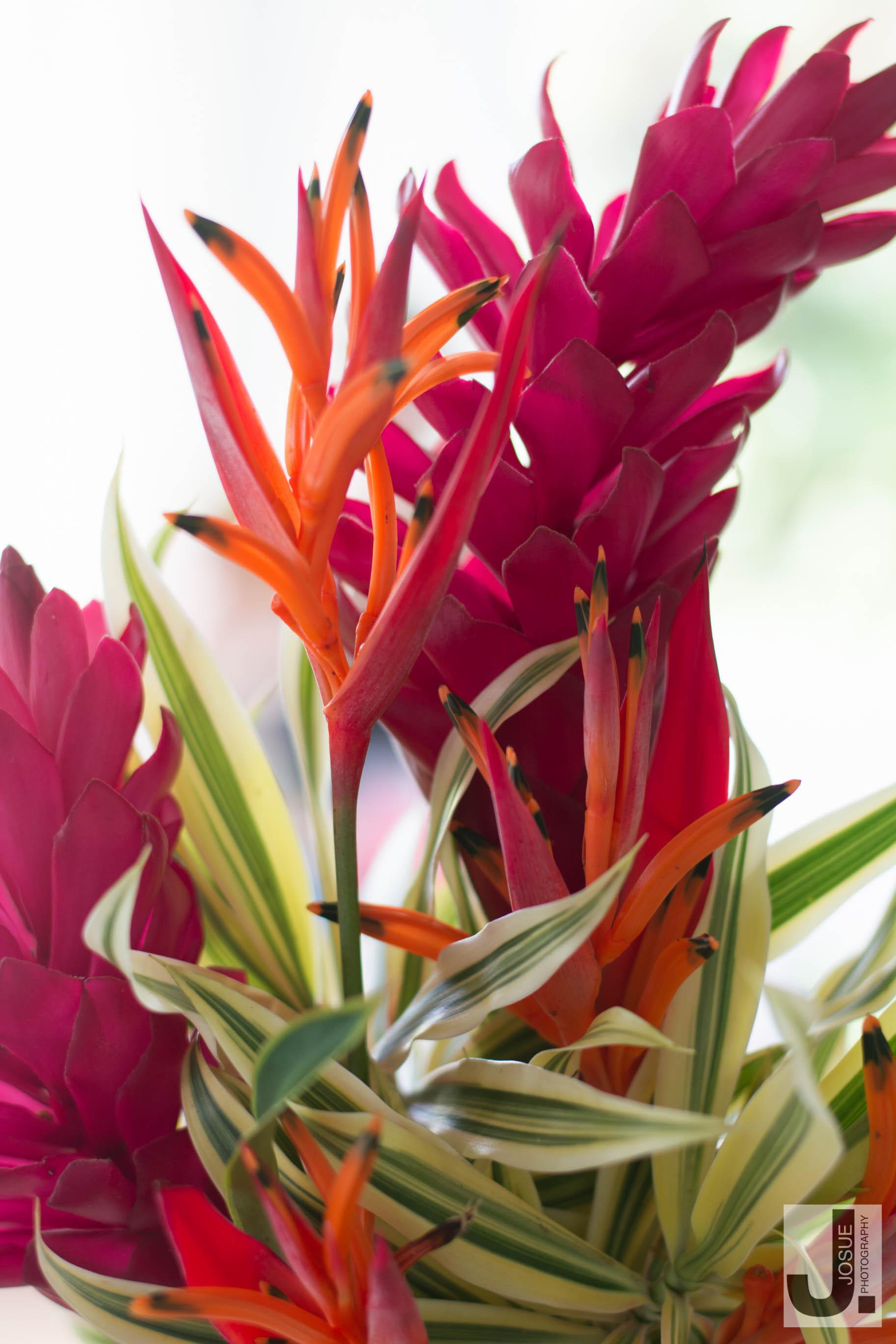 kauai-8.jpg