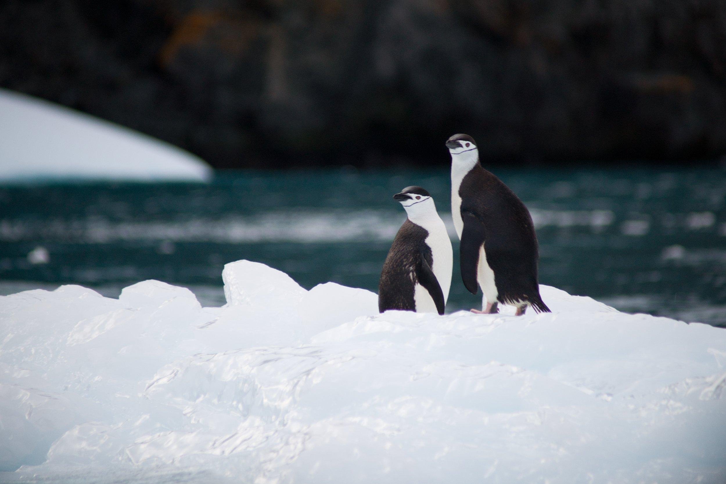 pinguinosantartida.jpg