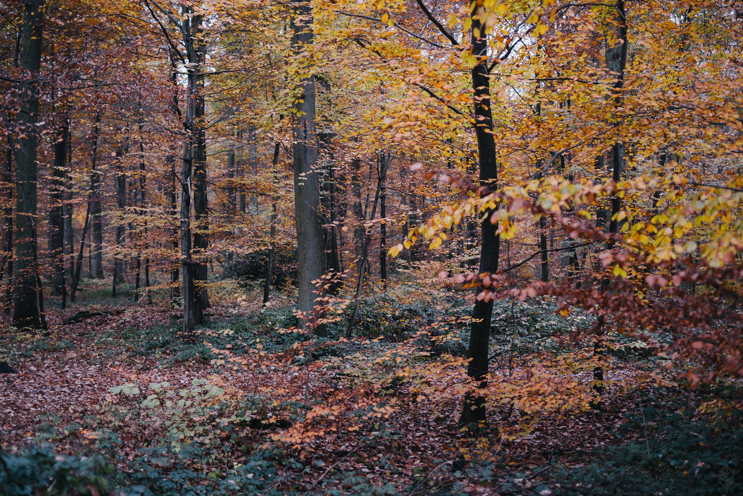 Rheinbacher Wald