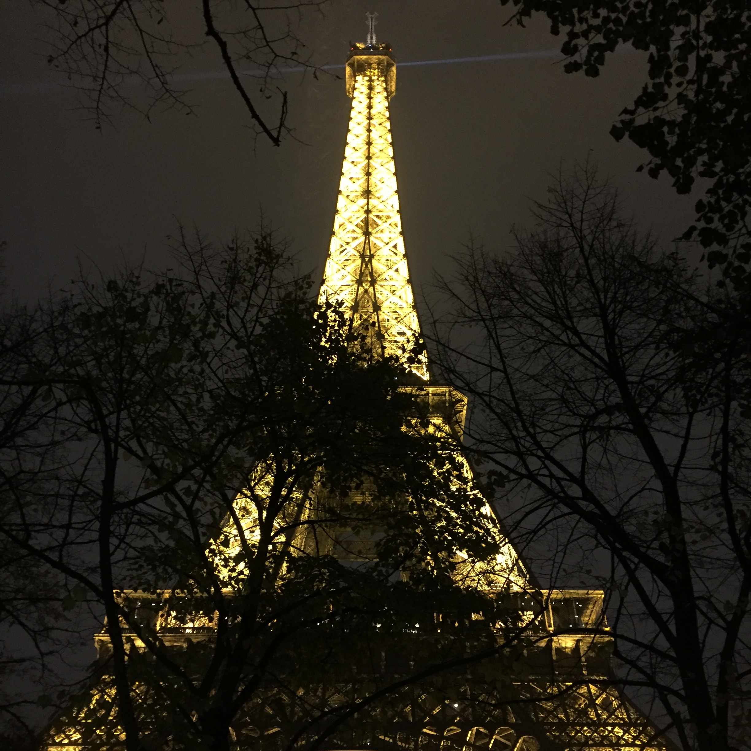 I love this picture because I like the dark silhouettes of the trees infront of the golden Eiffel Tower.