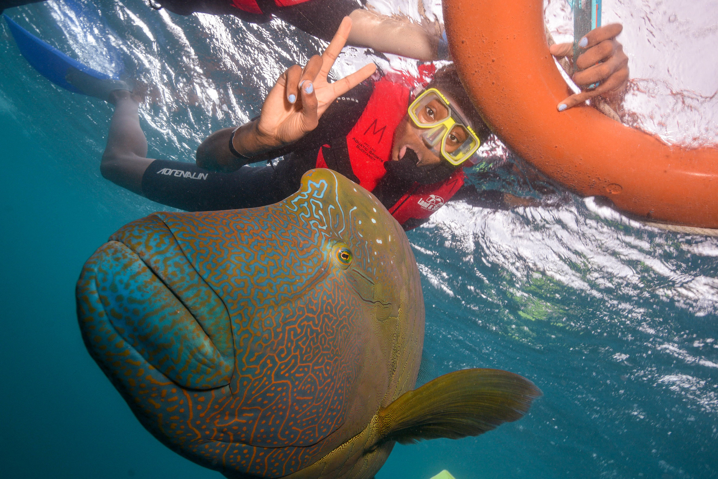 Biggest fish I have ever swam with!!