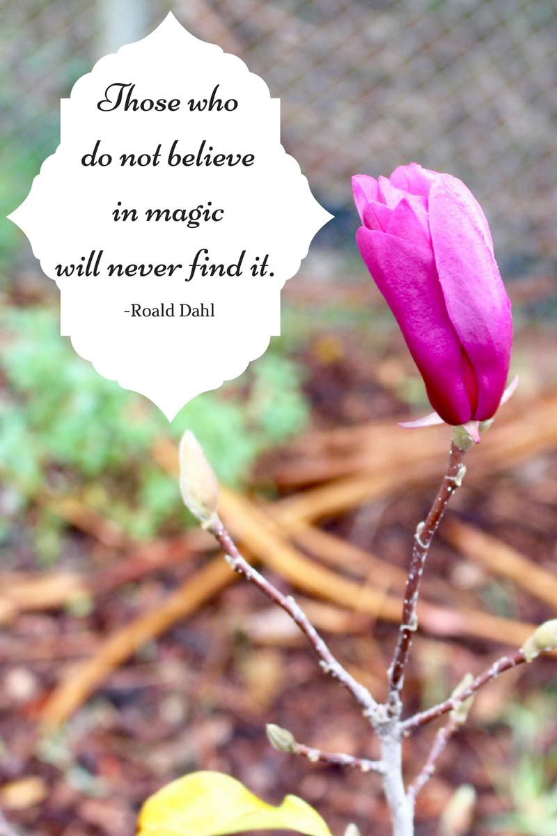 Magnolia_Roald_Dahl_quote
