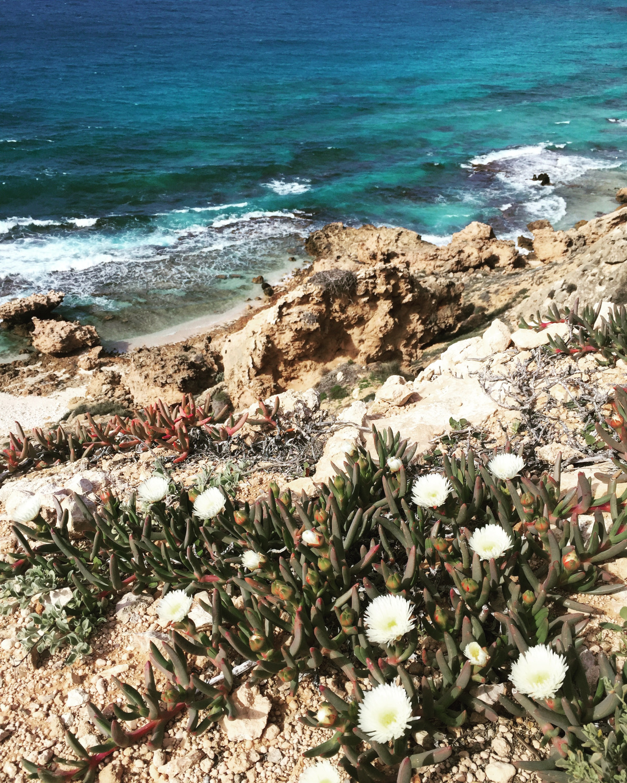 These flowers only grow on Dirt Hartog island, no where else!
