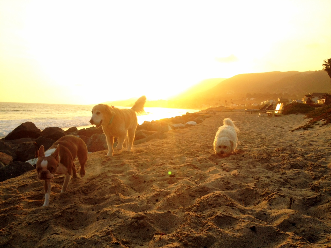 dog beach stroll sunset.JPG