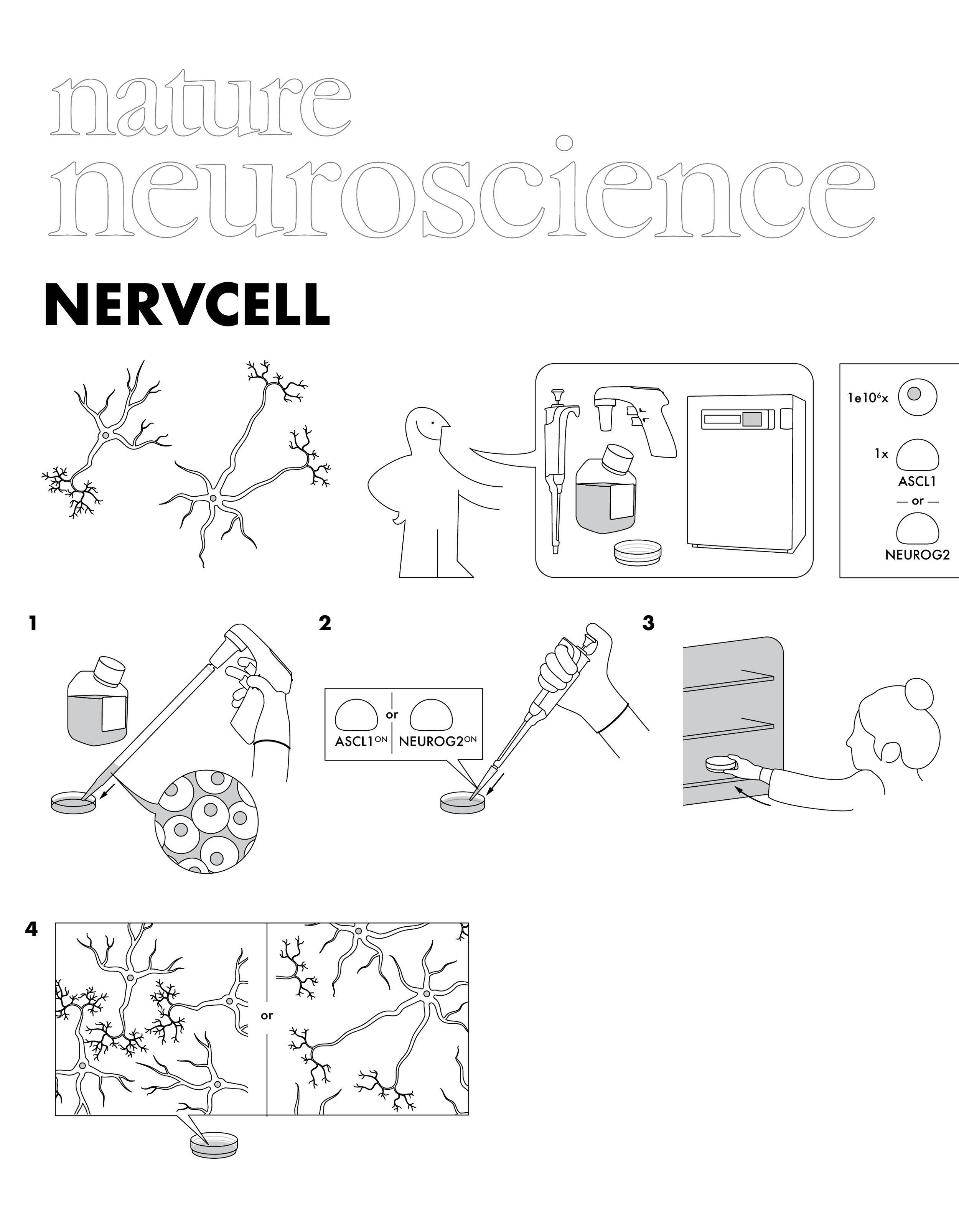 Nature Neuroscience (cover submission)
