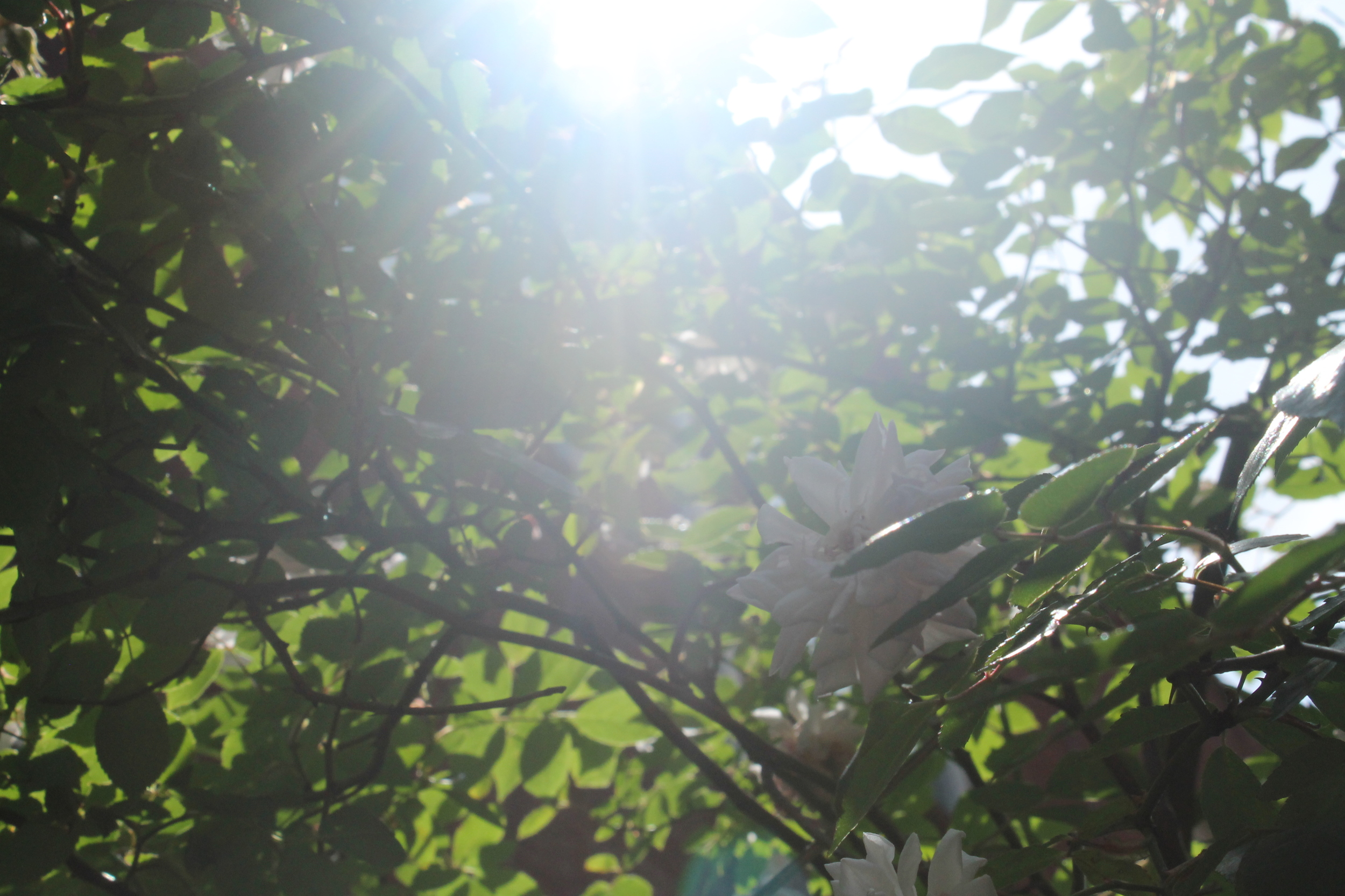 Morning Glow pt.1