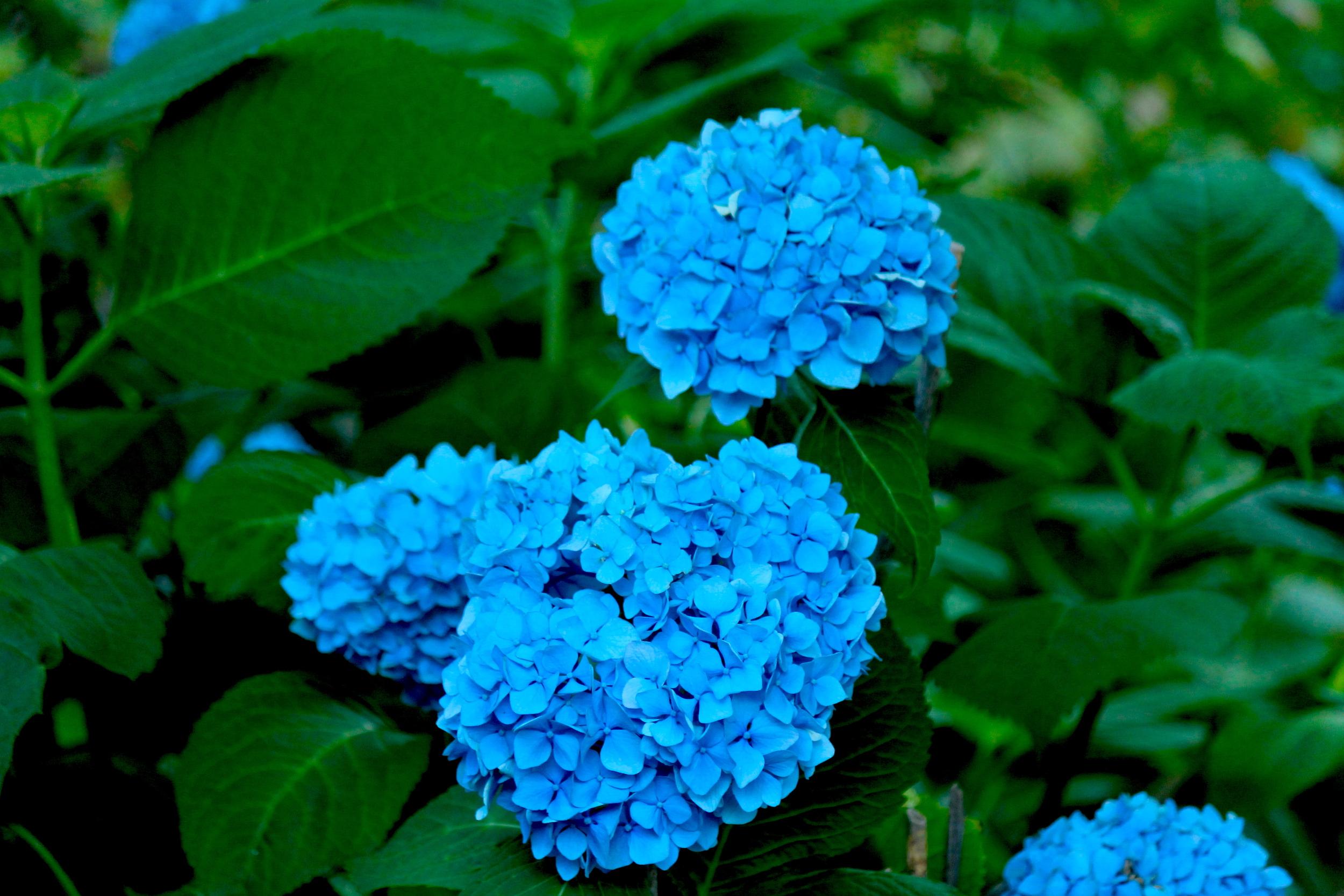 She Showed Me Azul