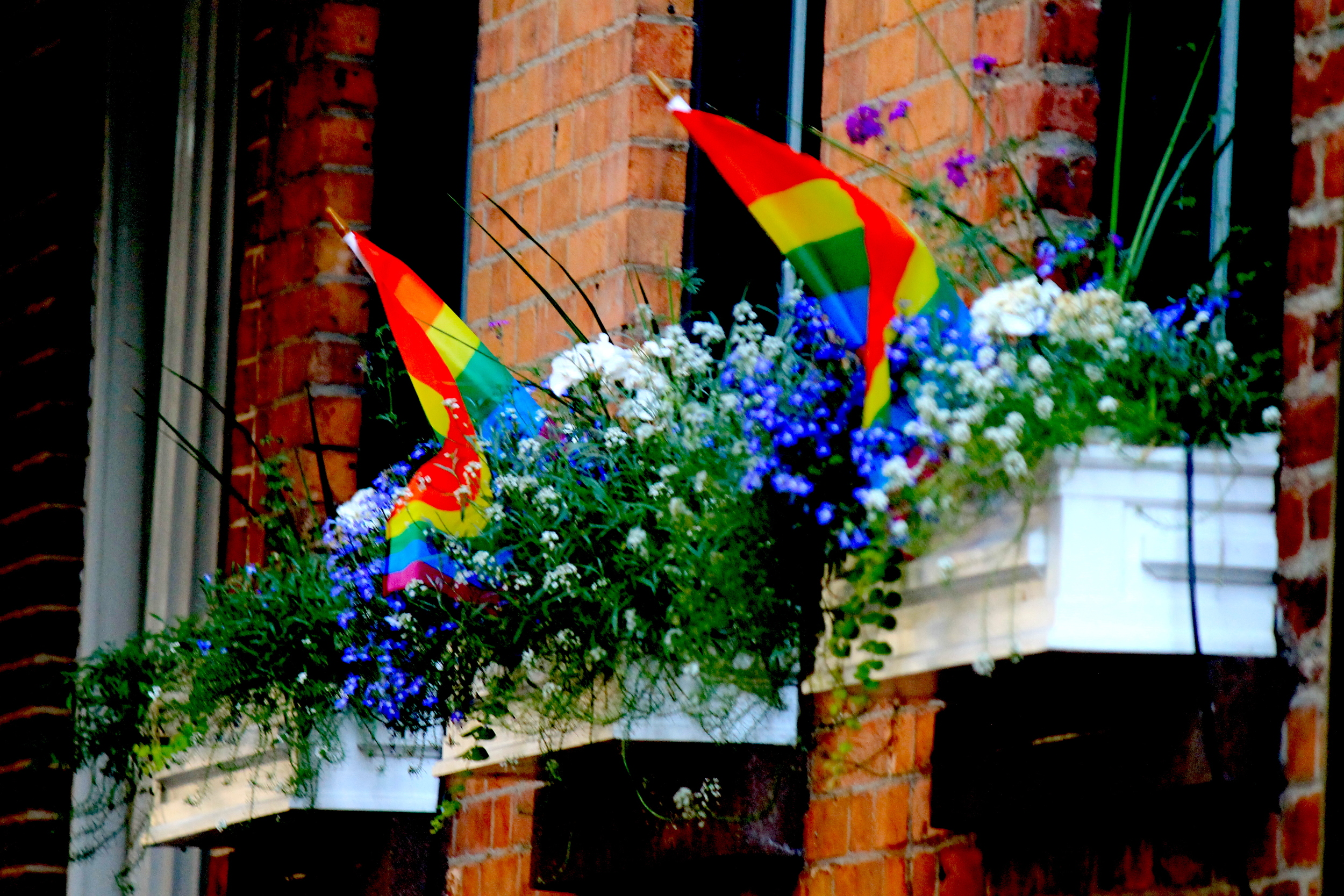 Pride Flags in Flower Beds