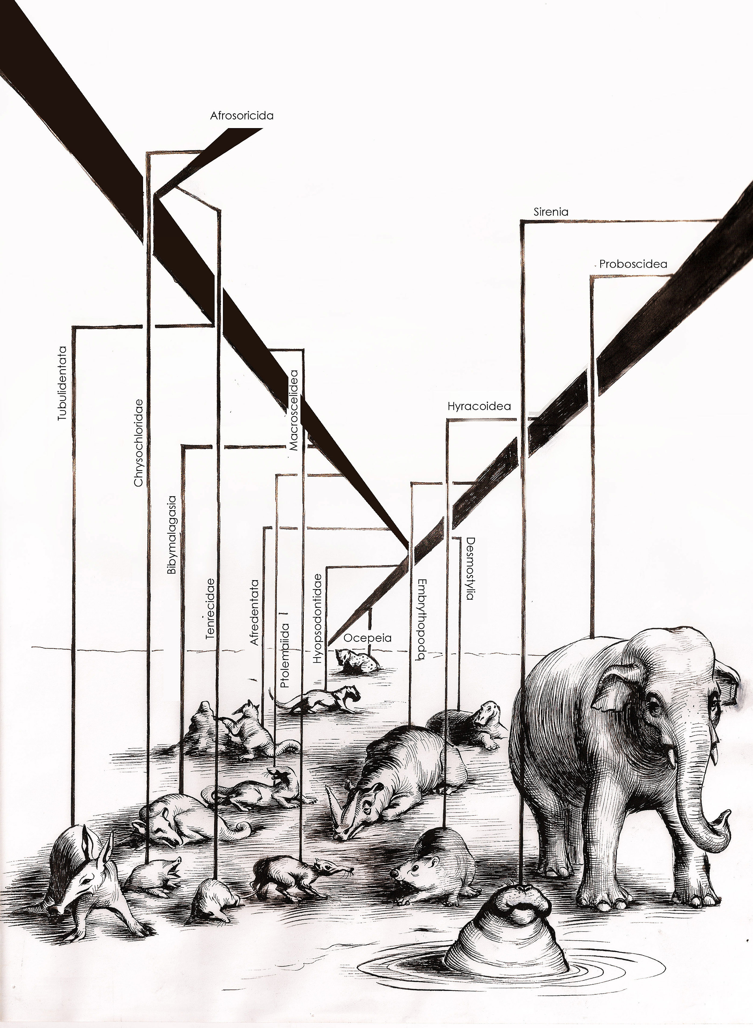 AFROTHERIA–India ink on paper. A visual representation of various mammalian orders that originated in Africa.