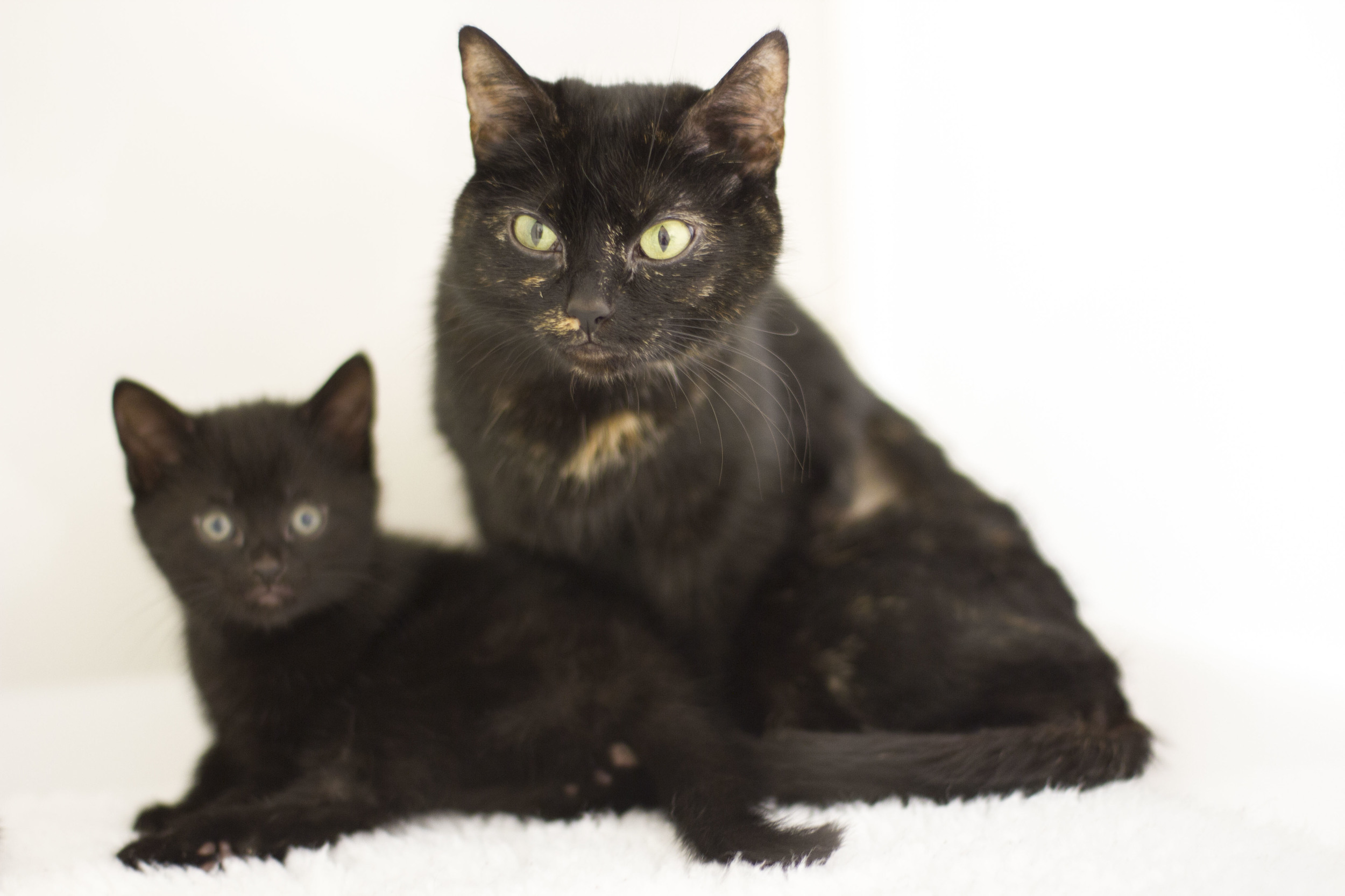 Recent abandonded mother and kitten, who have now settled into a new home.