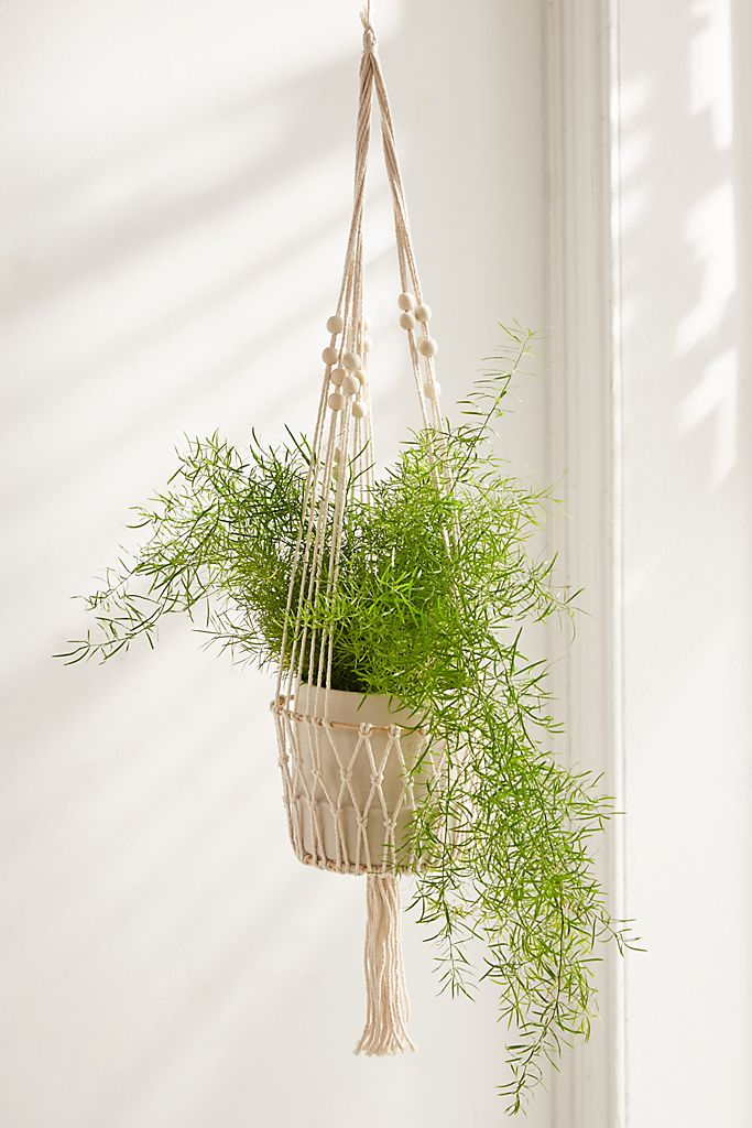 Plant Hangers - If you are a plant enthusiast but are unsure of how to arrange indoor plants in your living area, then you need to get ahold of some plant hangers! These are great for small living spaces as they don't take any floor or wall space.