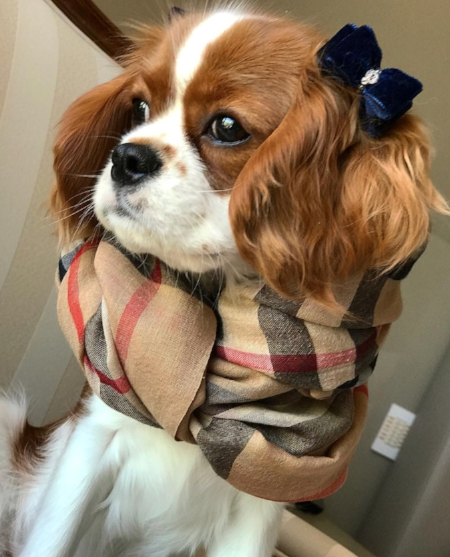 @matildathelady wearing our  Velvet Blue Swarovski Dog Hair Bow