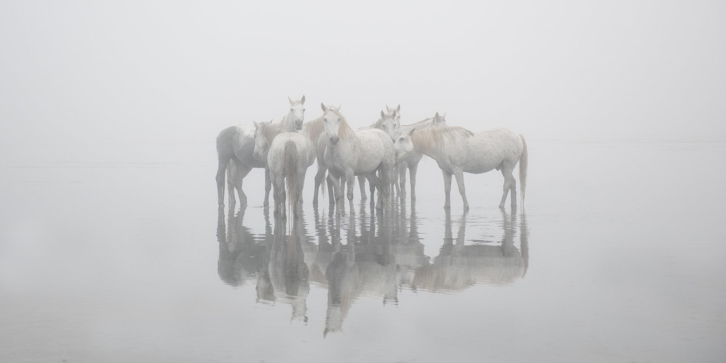 Misty Morn