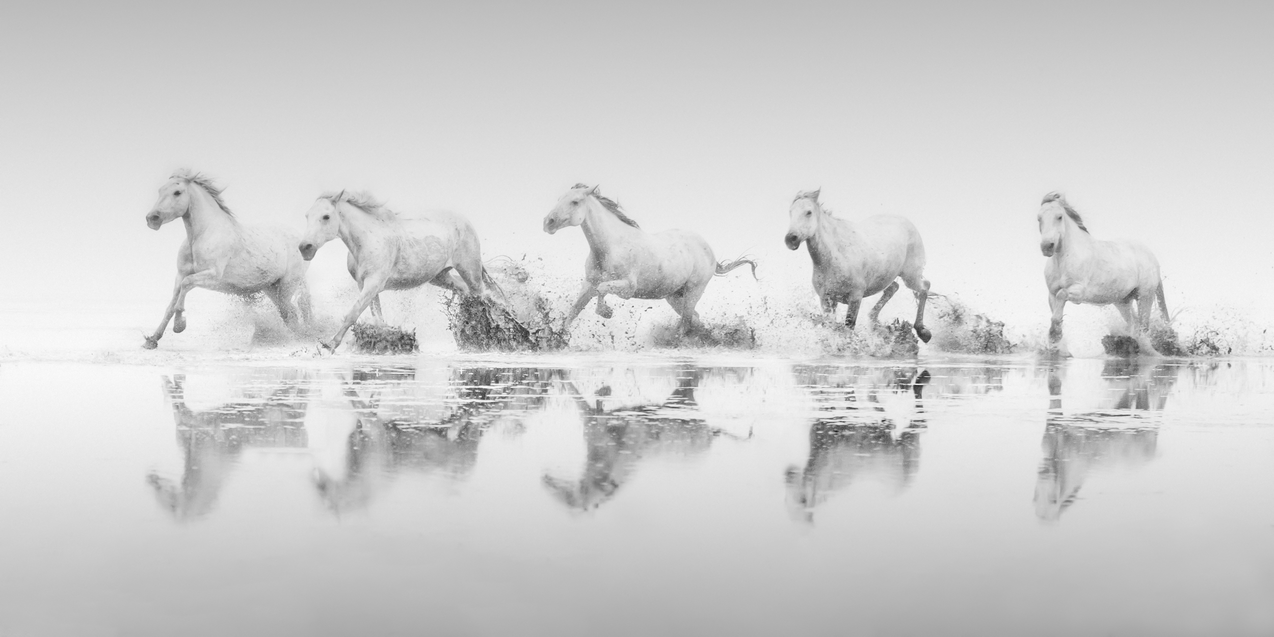 Reflections of the Camargue II
