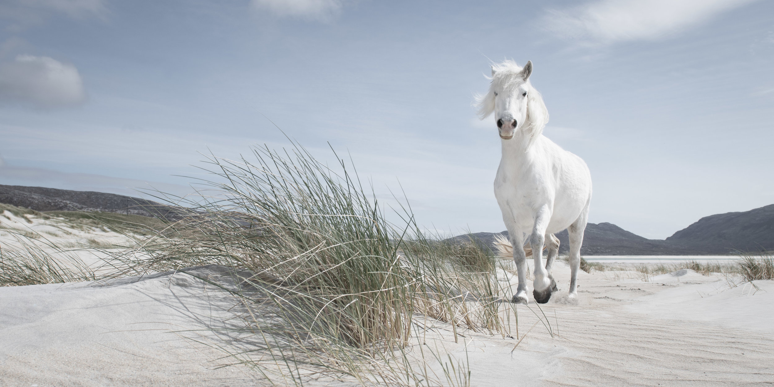 The White Horse of Luskentyre