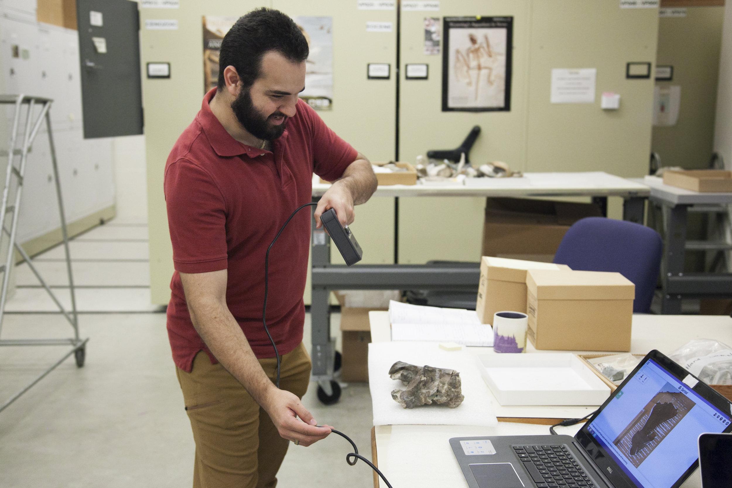 3D laser scanning Oligocene whale