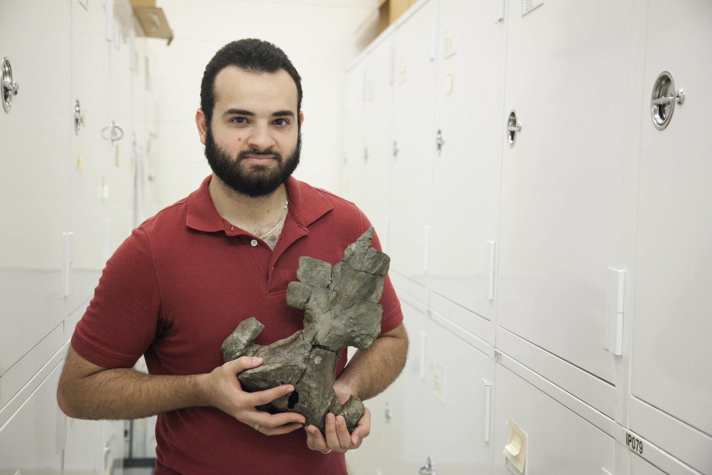 Oligocene whale: Burke Museum of Natural History