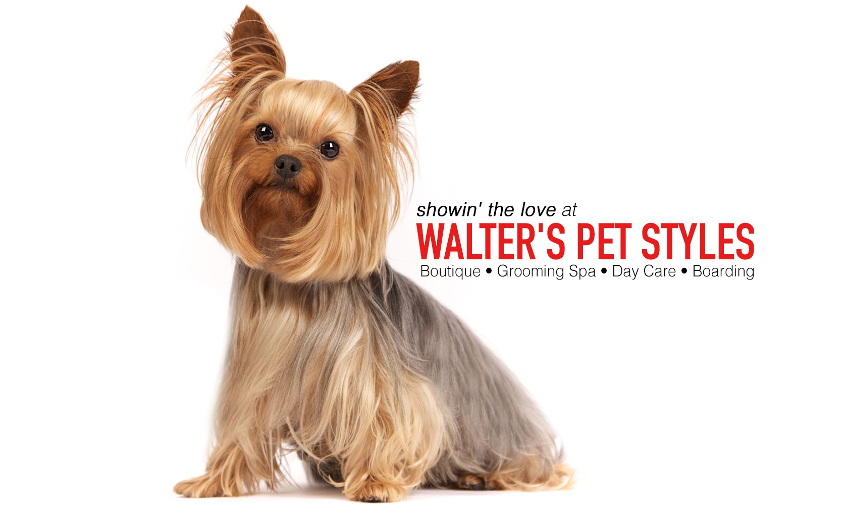 walters-pet-styles-dog-grooming-yorkie-text.jpg