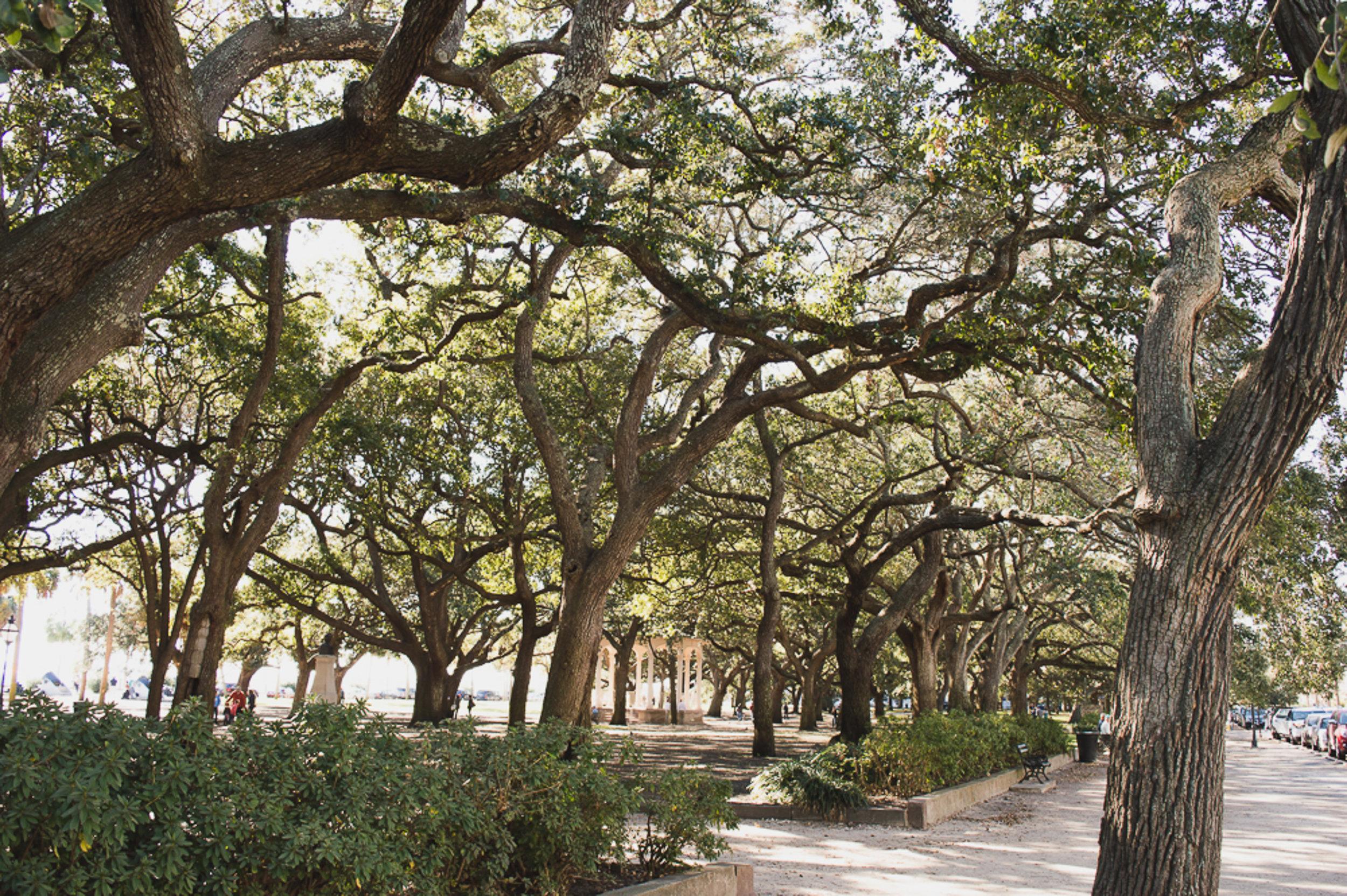 Charleston_1-7.jpg