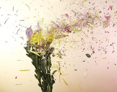 flower plode.jpg