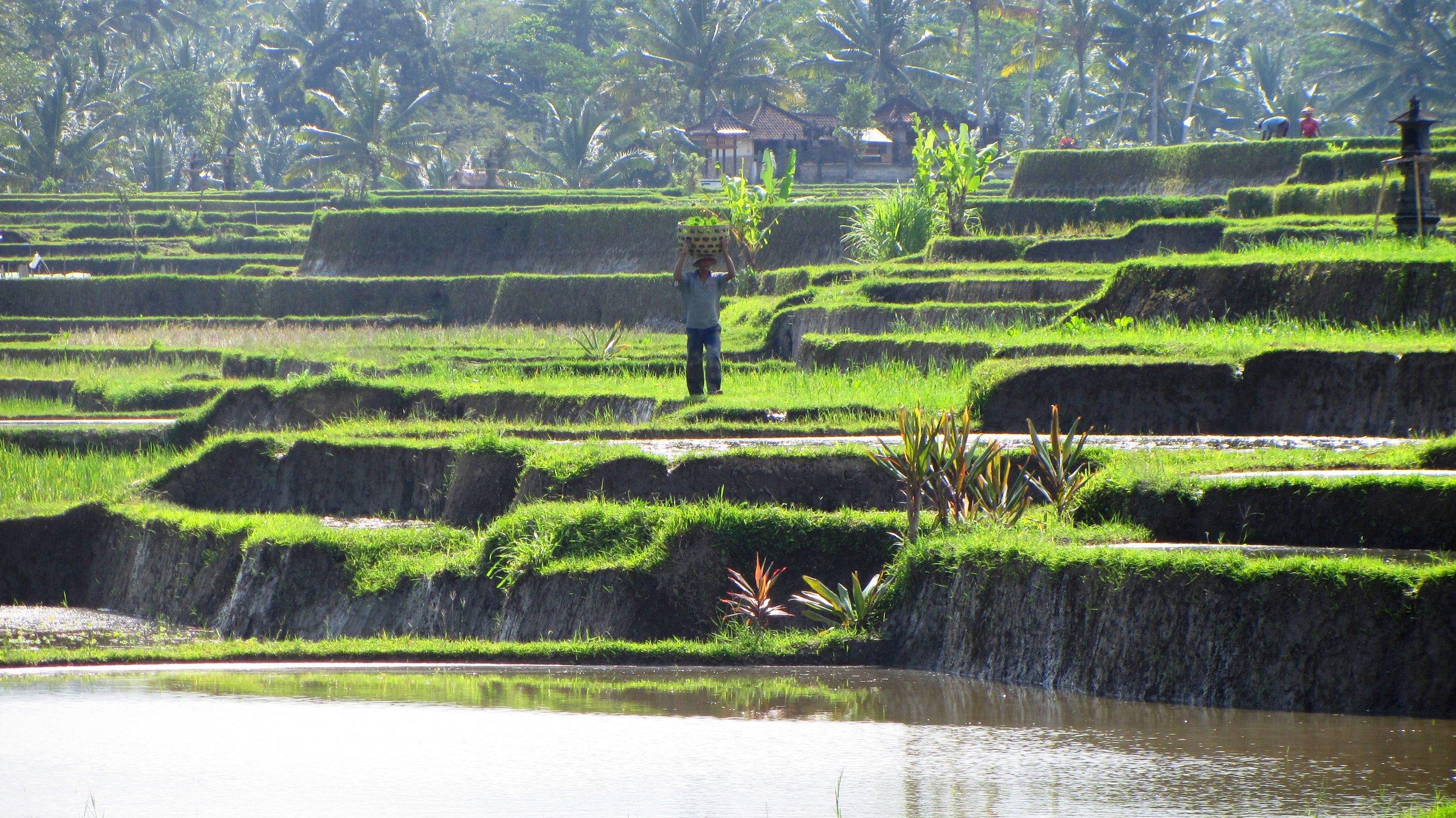 INDONESIA 2012