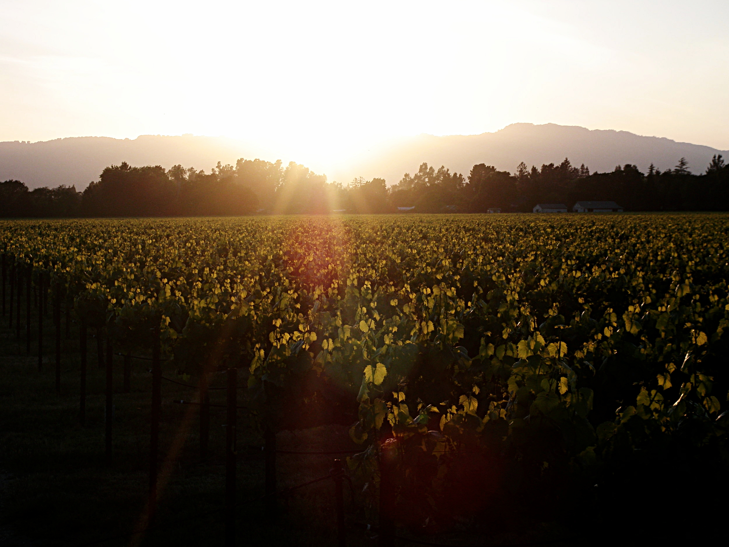 sonoma city public works, engineering + solar projects | sonoma, california | usa