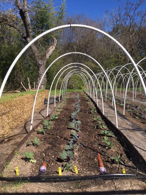 lettuce farms | austin, texas | usa