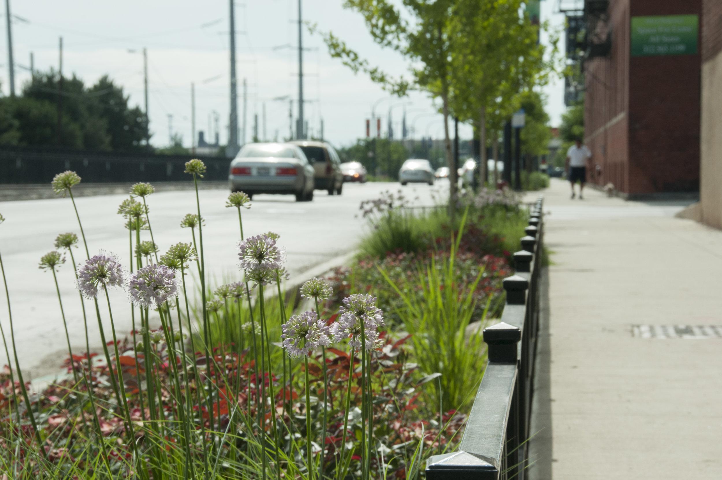 stony point green roadway improvements | santa rosa, california | USA