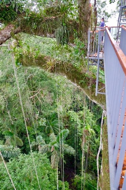 The Sacha's Kapok tree tower, 135 feet above the jungle floor.