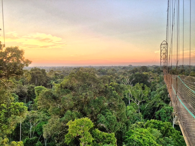 The Sacha Lodge canopy walk, nearly 100 feet off the ground and 940 feet long, perfect for watching animals and sunsets.
