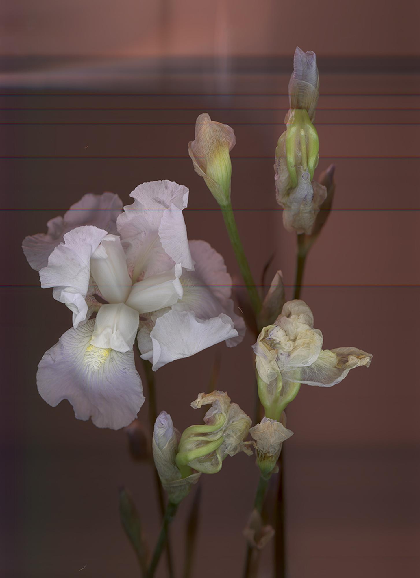 anna-skladmann-IRIS_02_retouched_WEB.jpg