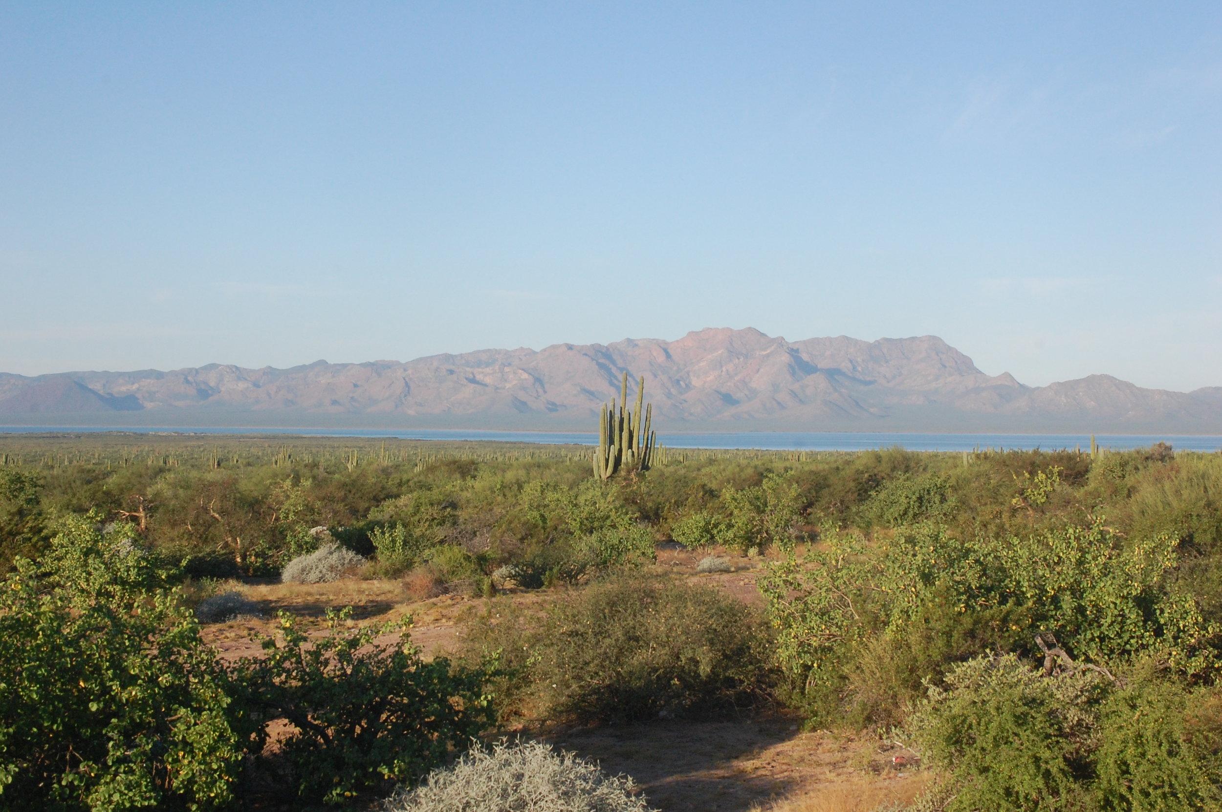 View of Isla Tiburón from the mainland amidst coastal thornscrub vegetation