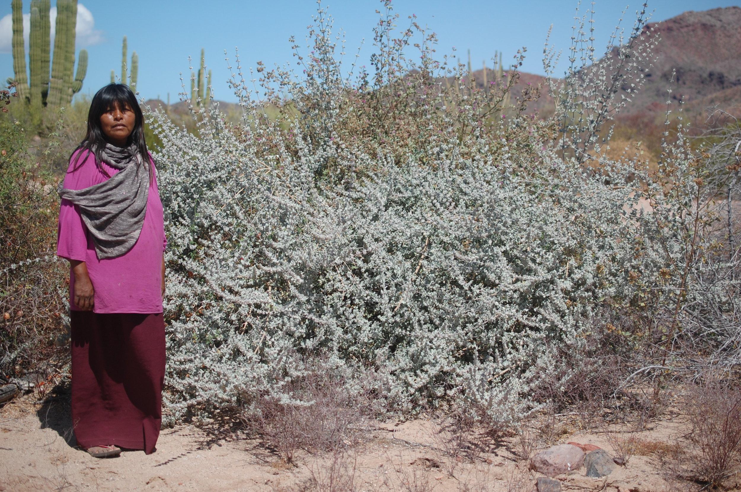 Maria Luisa standing beside her most cherished herbal ally, desert lavender