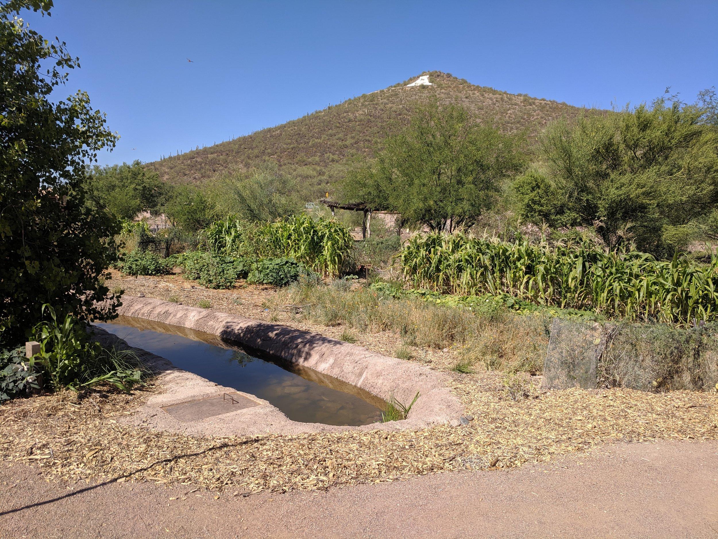 Mission Gardens in Tucson
