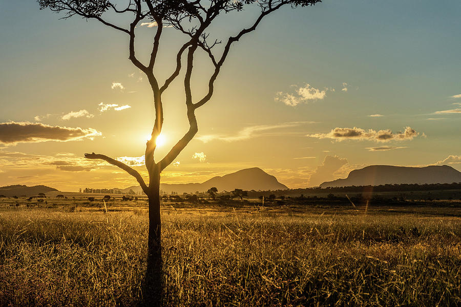 Cerrado Vegetation At Sunset In Chapada  - photograph by Vitor Marigo