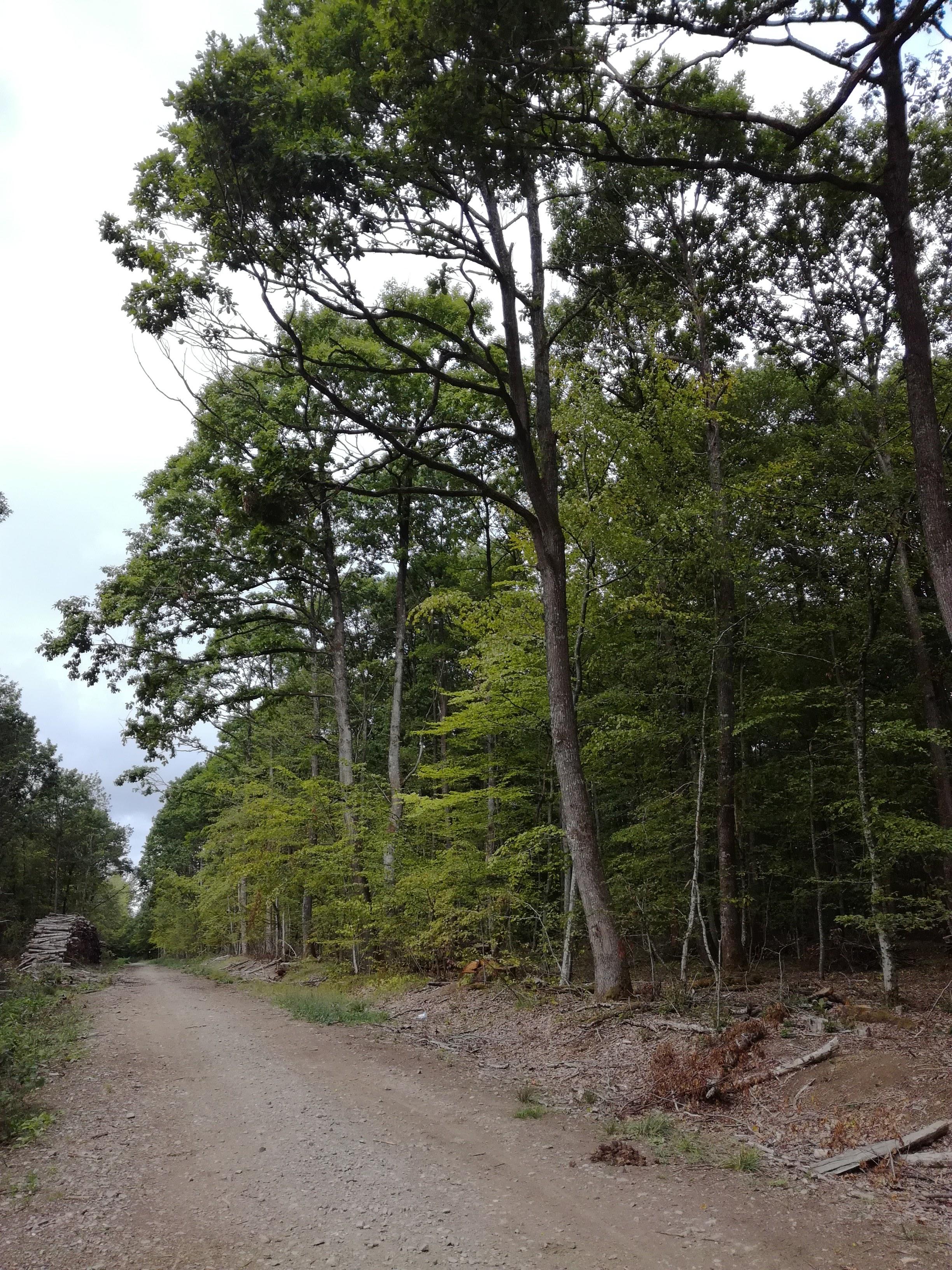 Rambouiellet Forest France.jpg