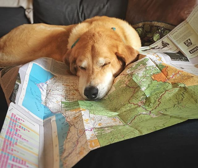 Adventure planning can be ruff.