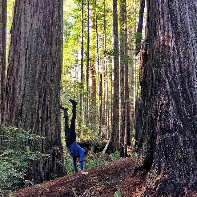 Handstanding on the shoulders of giants (redwood giants, to be specific)