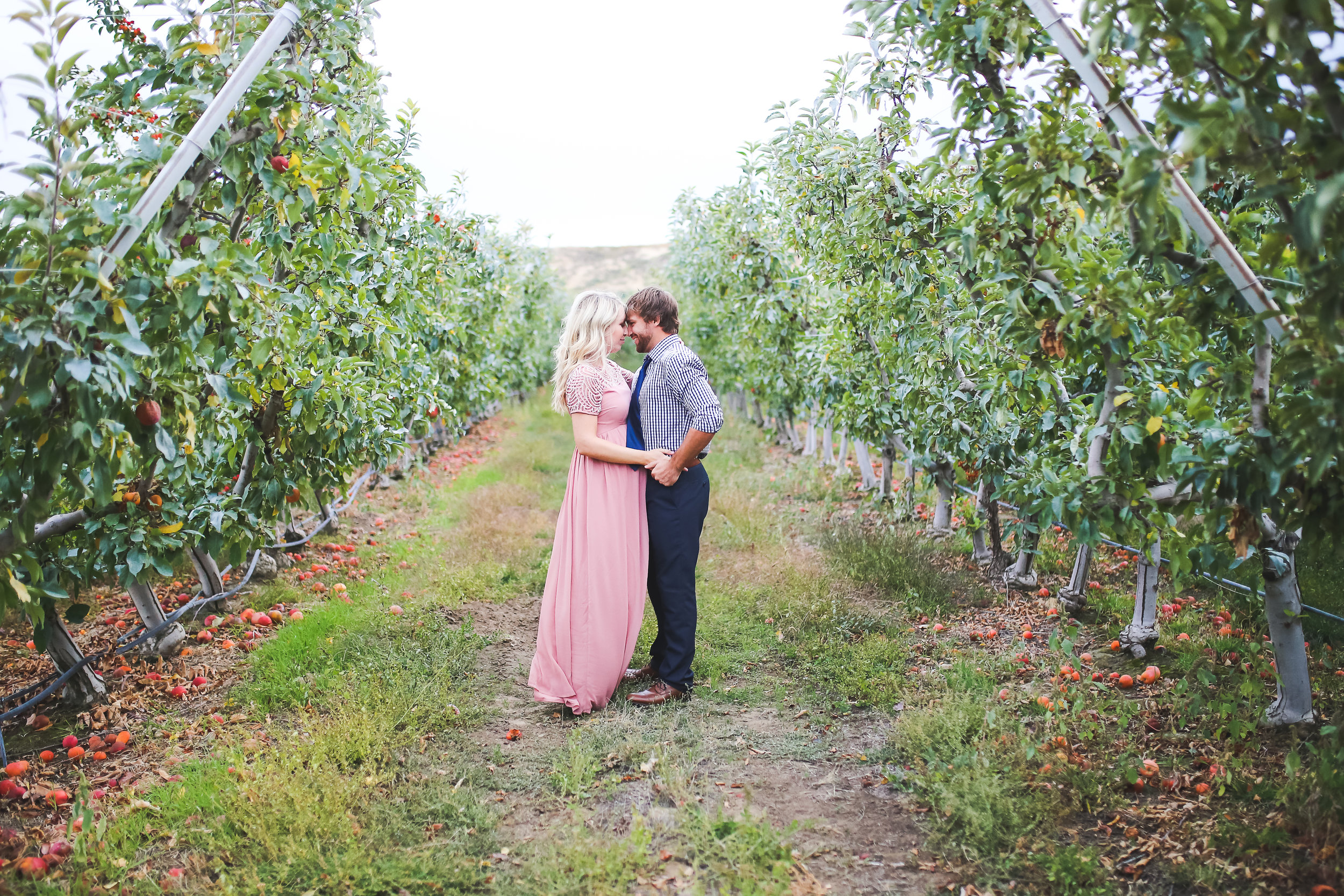Anderson maternity session in a beautiful Tri-City apple orchard