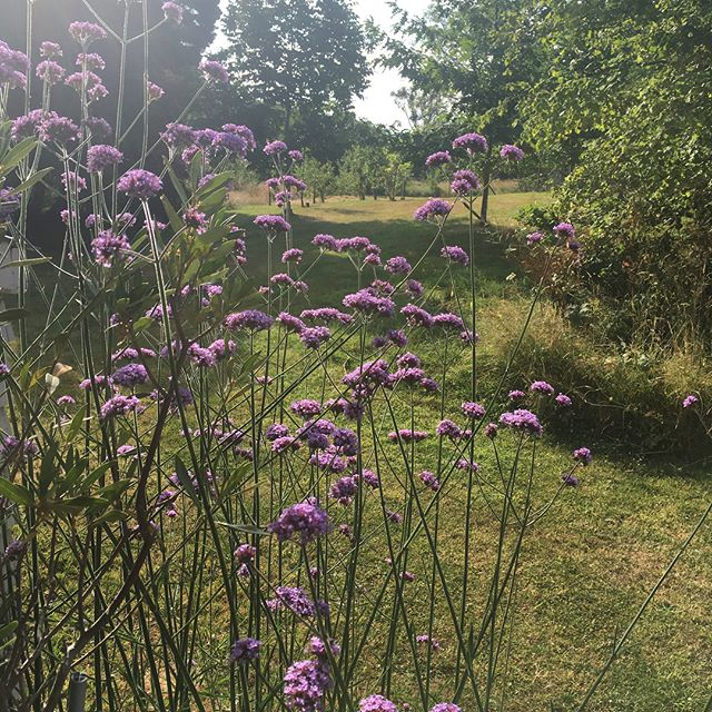 Summer time view from the porch. #photolocation #wildgarden #porch #filmlocation