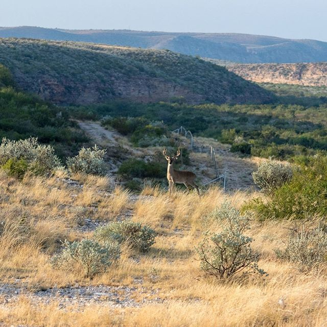 New listing! This 10,432+/- acre West Texas ranch offers quiet solitude only this part of Texas can provide. Abundant quail, whitetail deer, dove and many other native species call this ranch home. The hilltops provide long and expansive views untouched by civilization. Multiple water wells provide water for livestock and wildlife. Electricity runs to the old ranch headquarters where several rock buildings and working pens are located near the center of the ranch. The front gate is just a few miles away from the historic site of Judge Roy Bean's famous Jersey Lilley Saloon in Langtry,TX. $595/acre $6,900,000 . . . . . . #ranchrealestate #realestate #texasrealestate #texasrealtor #ranch #texasranch #ranchlife #ranchy #huntingranch #hunting #huntinglife #texashunting