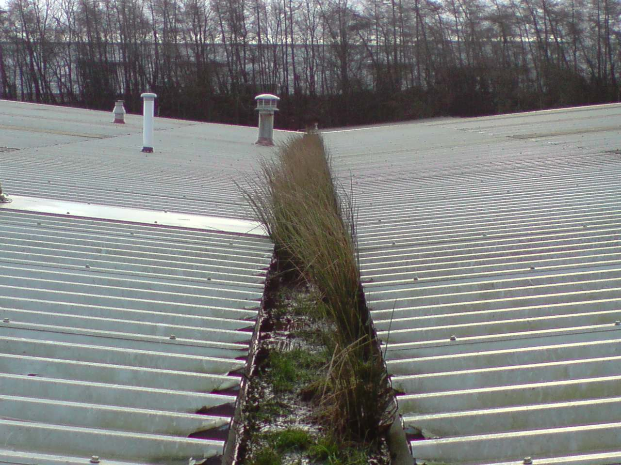 Commercial Gutter Cleaning Before.jpg