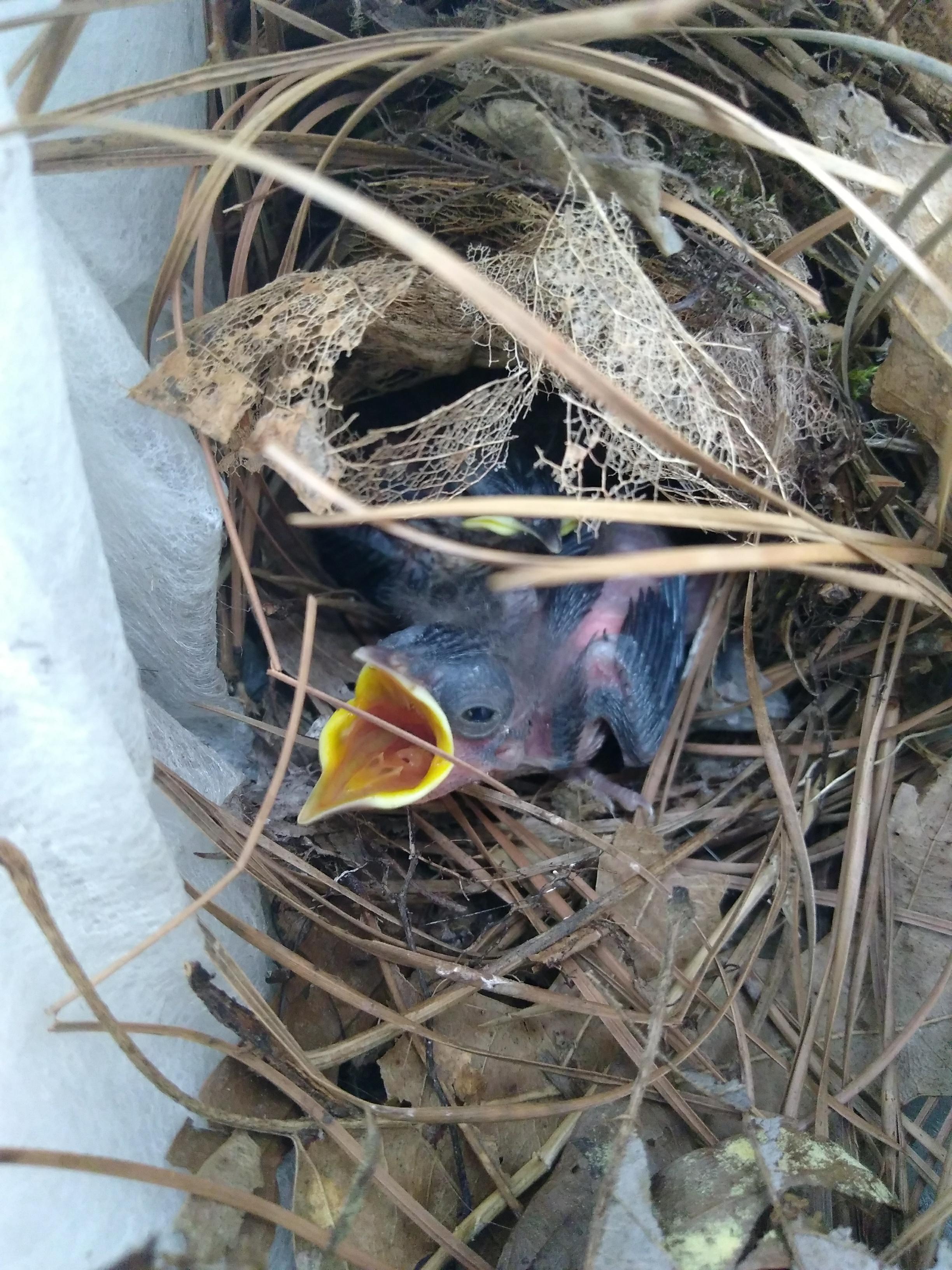 Baby bird close-up