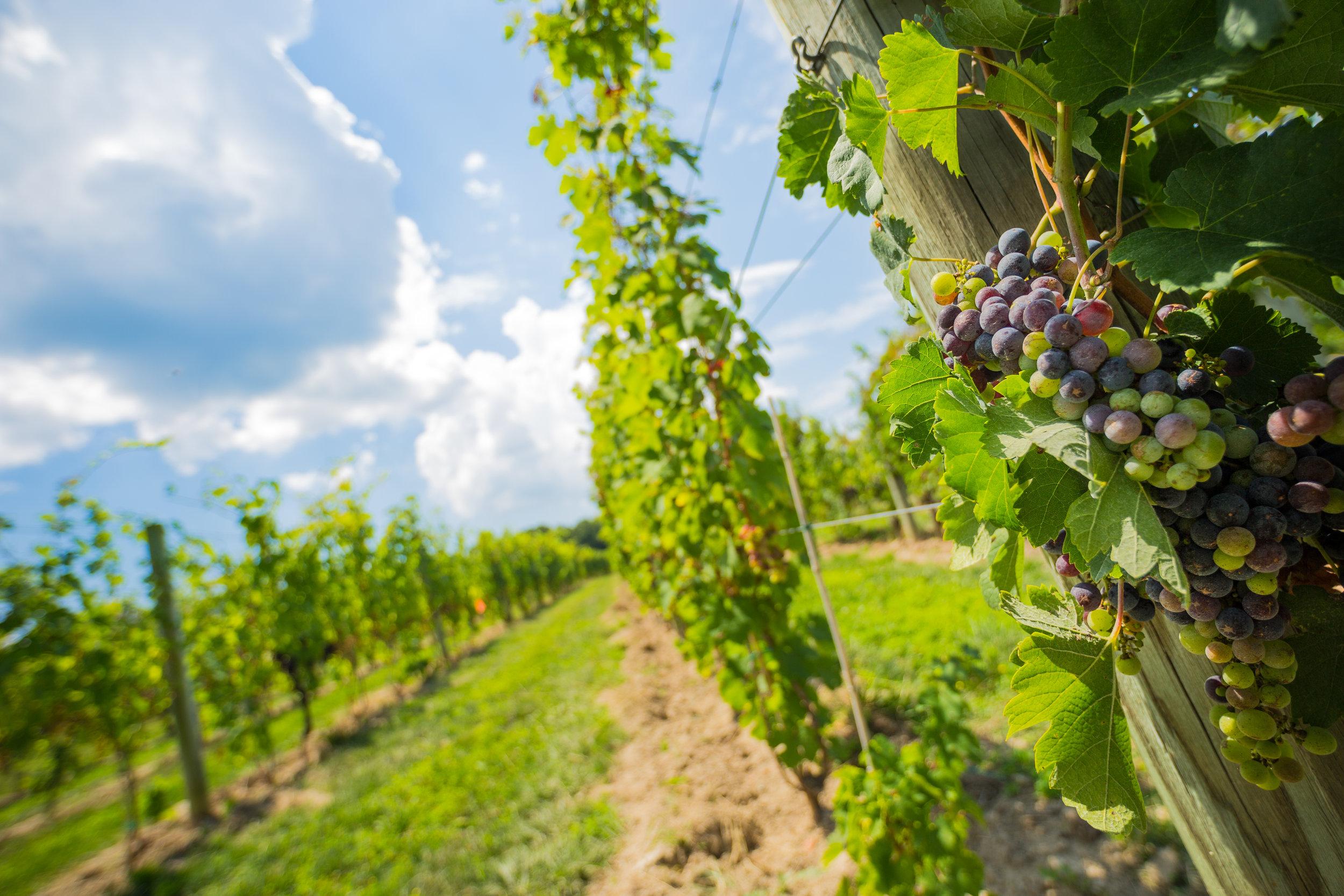 Wineries Shenandoah Spirits Trail