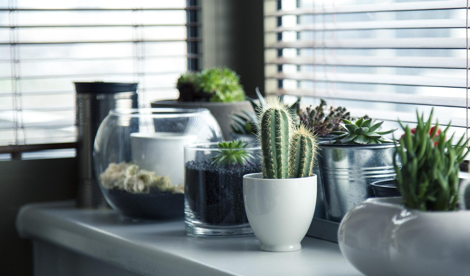 pots-716579_1920.jpg