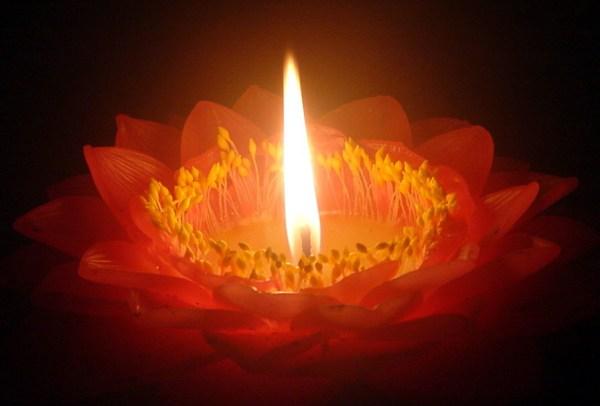 lotuslight.jpg