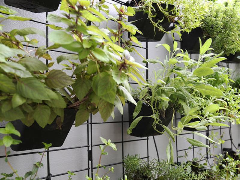 Air purifying elements - On average the air quality indoors can be two to five times worse than the air quality outsideTo mitigate this, WHIT uses air purifying plants and an air filtration system