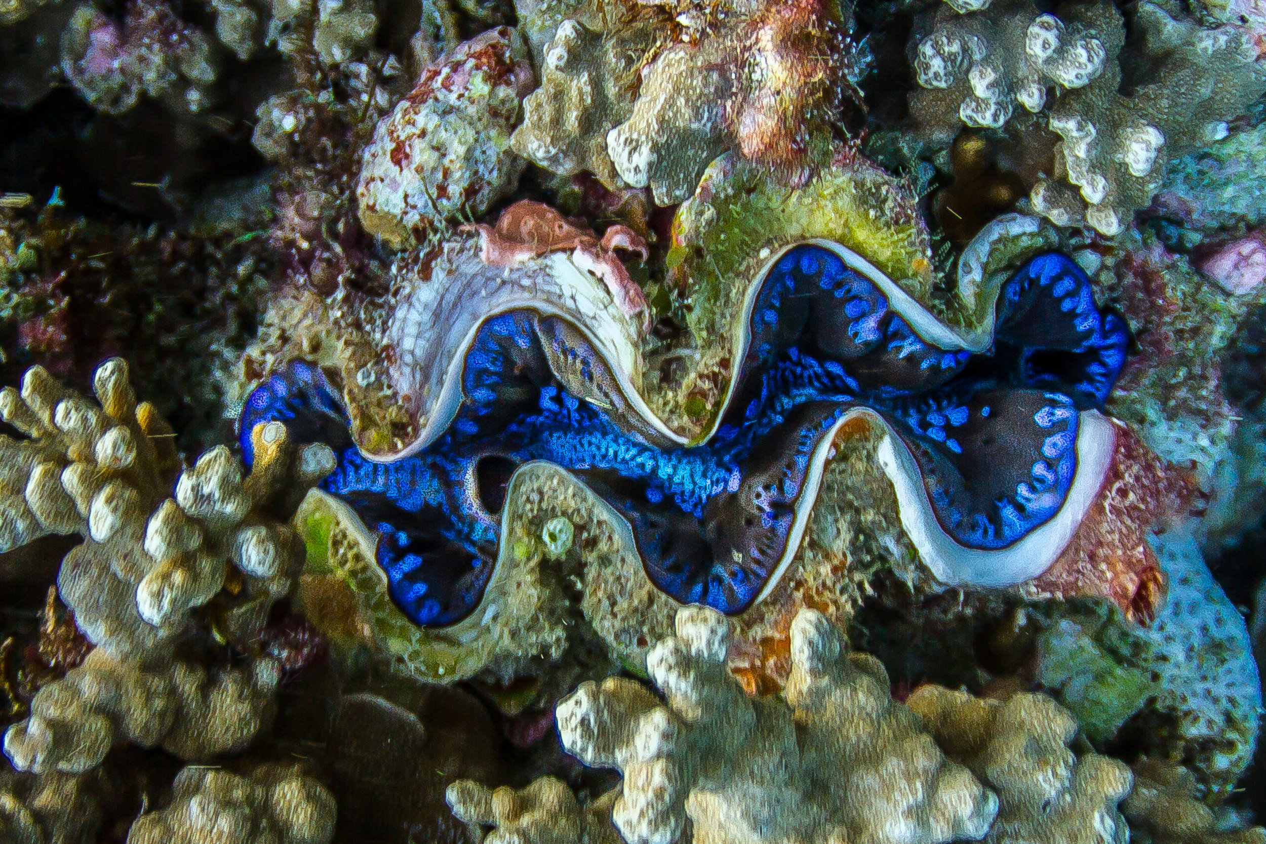 Giant Clam by DBZFan30.jpg