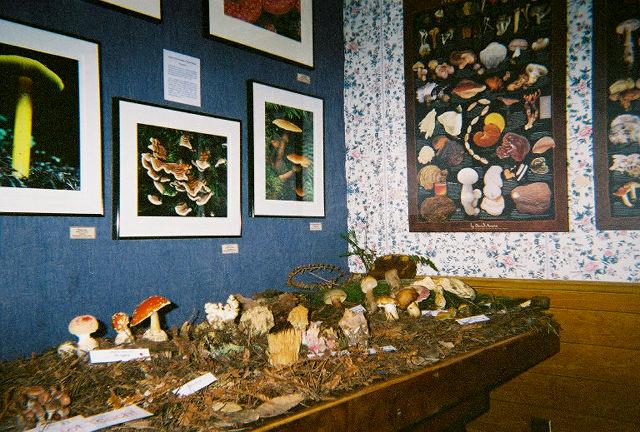 Mushroom+Exhibit+(2).jpg